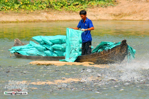 Hình ảnh từ vựa cá tra chế biến xuất khẩu sang Trung Quốc - Ảnh 1.