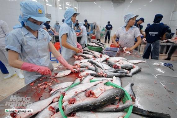 Hình ảnh từ vựa cá tra chế biến xuất khẩu sang Trung Quốc - Ảnh 16.
