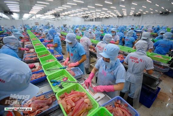 Hình ảnh từ vựa cá tra chế biến xuất khẩu sang Trung Quốc - Ảnh 17.