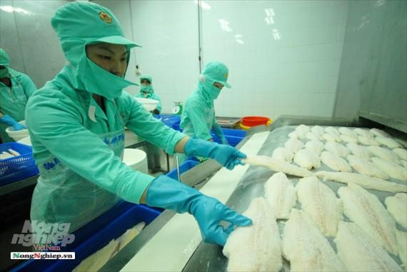 Hình ảnh từ vựa cá tra chế biến xuất khẩu sang Trung Quốc - Ảnh 20.