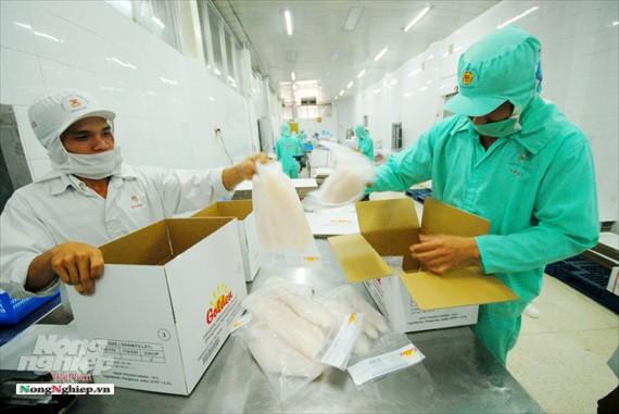 Hình ảnh từ vựa cá tra chế biến xuất khẩu sang Trung Quốc - Ảnh 21.