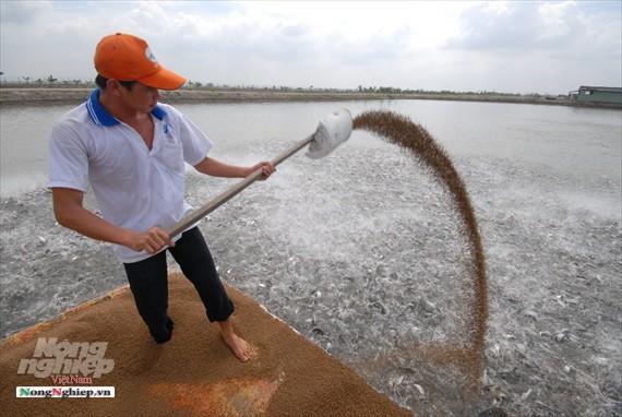 Hình ảnh từ vựa cá tra chế biến xuất khẩu sang Trung Quốc - Ảnh 4.