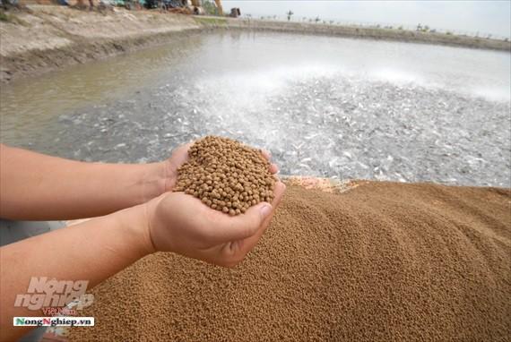 Hình ảnh từ vựa cá tra chế biến xuất khẩu sang Trung Quốc - Ảnh 5.