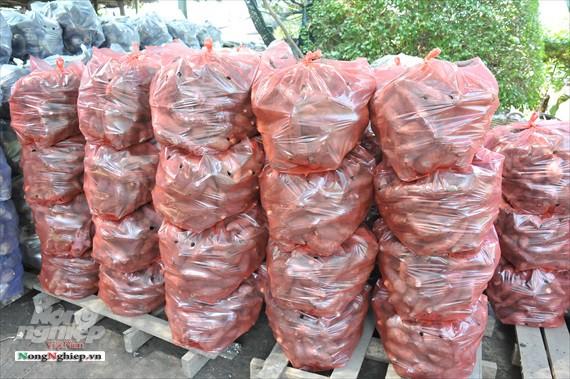 Vựa khoai lang lớn nhất miền Tây xuất khẩu sang Trung Quốc - ảnh 17
