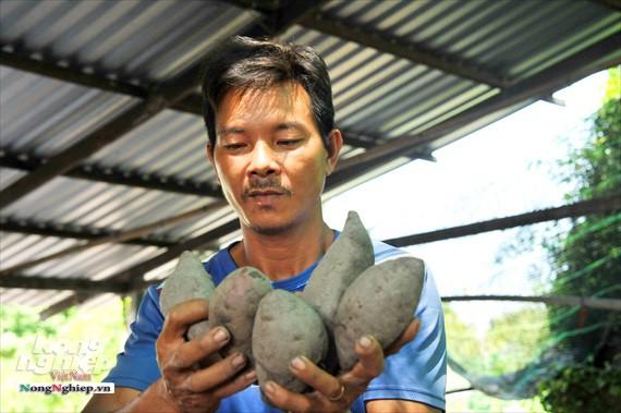 Vựa khoai lang lớn nhất miền Tây xuất khẩu sang Trung Quốc - ảnh 21