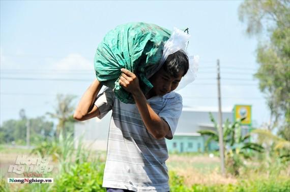 Vựa khoai lang lớn nhất miền Tây xuất khẩu sang Trung Quốc - ảnh 23
