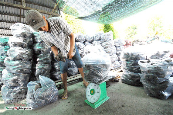 Vựa khoai lang lớn nhất miền Tây xuất khẩu sang Trung Quốc - ảnh 24