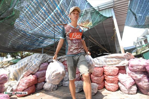 Vựa khoai lang lớn nhất miền Tây xuất khẩu sang Trung Quốc - ảnh 25