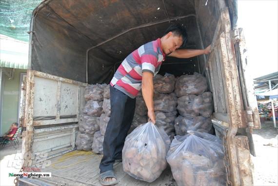 Vựa khoai lang lớn nhất miền Tây xuất khẩu sang Trung Quốc - ảnh 26