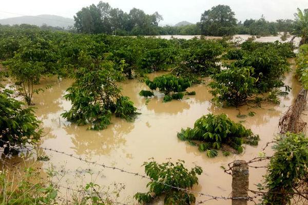 Trăm hộ dân ngập nước, dọa vỡ hồ chứa 700 nghìn m3 ở Đắk Lắk - Ảnh 3.