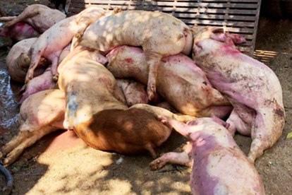Bộ trưởng Nông nghiệp Nguyễn Xuân Cường: Chi 2.370 tỷ đồng hỗ trợ nông dân bị thiệt hại bởi dịch bệnh tồi tệ nhất lịch sử - Ảnh 1.