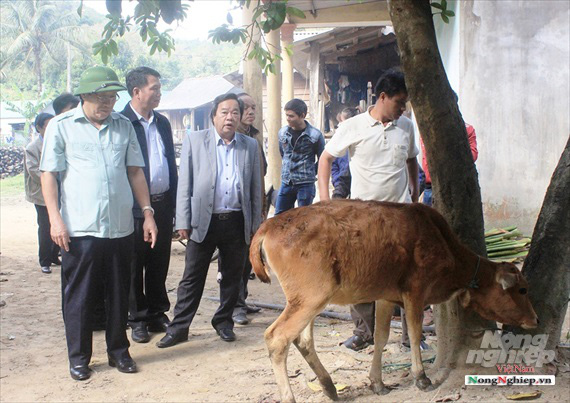 Quảng Trị: 6 xã của 1 huyện có đàn gia súc mắc lở mồm long móng - Ảnh 1.