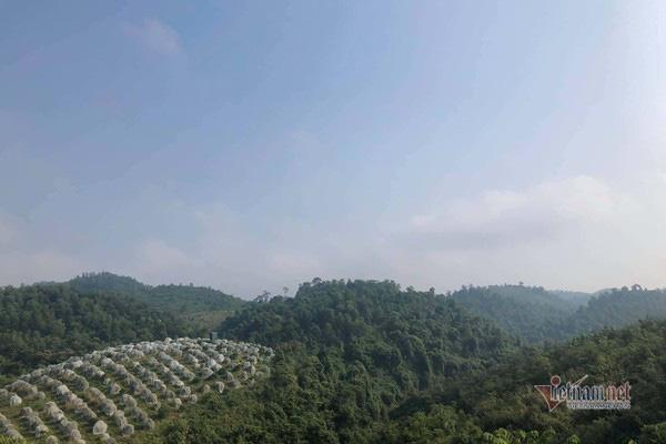 Đồi cam 6 tỷ kỳ lạ nhất Việt Nam, 2.000 cây mắc màn trắng cả rừng - Ảnh 1.