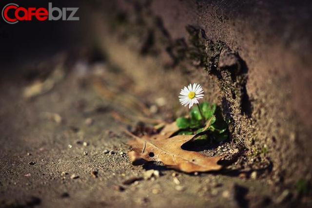 Than thở kể khổ - bệnh của kẻ thất bại: Người thành công luôn mang tâm thái bình thản và chỉ quan tâm tới cơ hội - Ảnh 2.