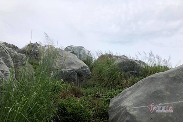 Đồi cam 6 tỷ kỳ lạ nhất Việt Nam, 2.000 cây mắc màn trắng cả rừng - Ảnh 11.