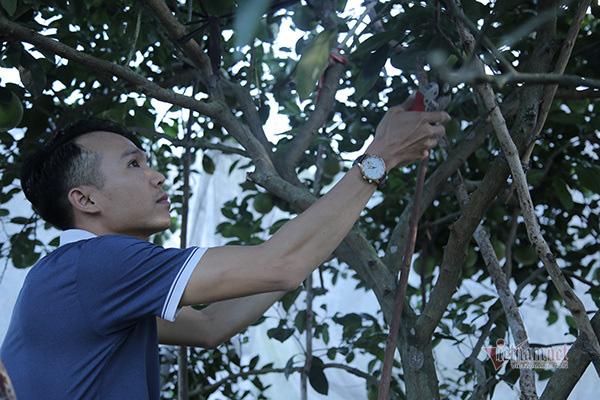 Đồi cam 6 tỷ kỳ lạ nhất Việt Nam, 2.000 cây mắc màn trắng cả rừng - Ảnh 8.