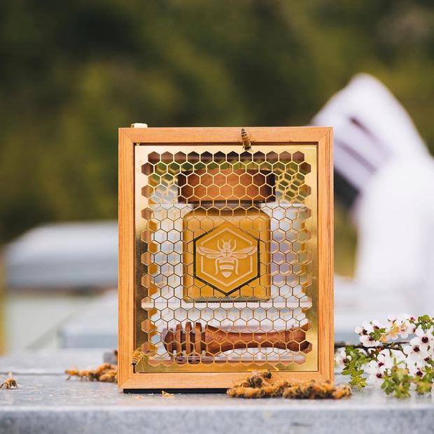 Có gì bên trong loại mật ong đắt tiền nhất thế giới khiến dân tình sẵn sàng chi tới nghìn đô để mua cho bằng được? - Ảnh 5.