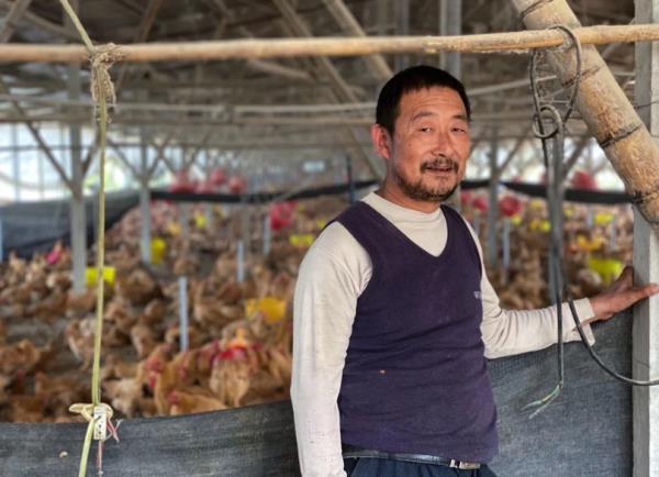 Lợn chết chuyển sang nuôi gà, nông dân Trung Quốc vẫn méo mặt vì thua lỗ - Ảnh 1.