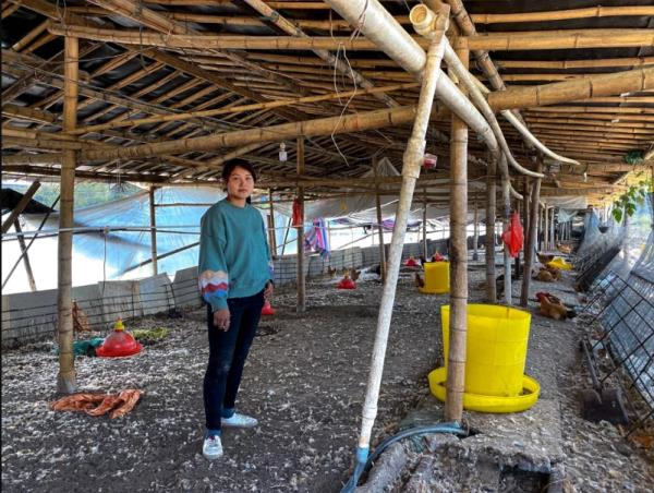 Lợn chết chuyển sang nuôi gà, nông dân Trung Quốc vẫn méo mặt vì thua lỗ - Ảnh 2.