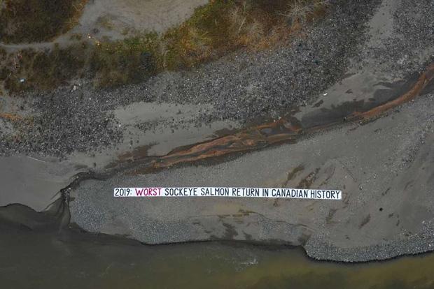 Suốt 2 năm qua người Canada không dám ăn đến một miếng cá hồi hoang dã, nguyên nhân chính là vì đường ống địa ngục ai cũng khiếp sợ - Ảnh 3.