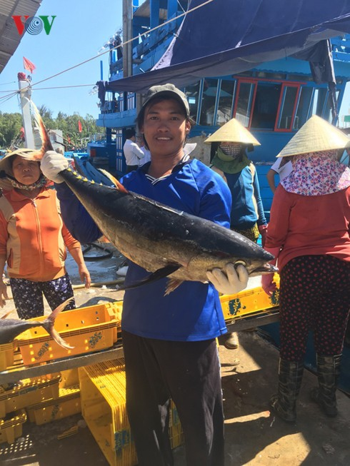 """Đánh cá """"xuyên Tết"""", ngư dân Quảng Ngãi trúng mẻ cá ngừ 50 tấn - Ảnh 2."""