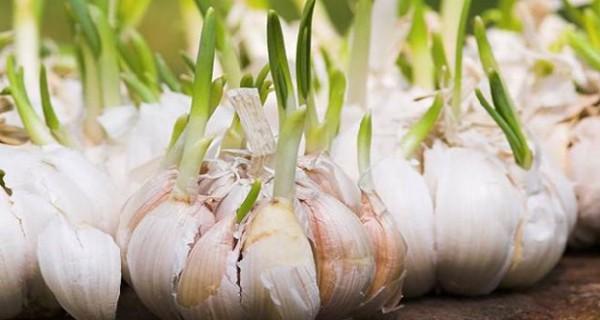 Sau Tết đừng tiếc rẻ những thực phẩm này vì rất độc hại, tuyệt đối đừng ăn - Ảnh 2.