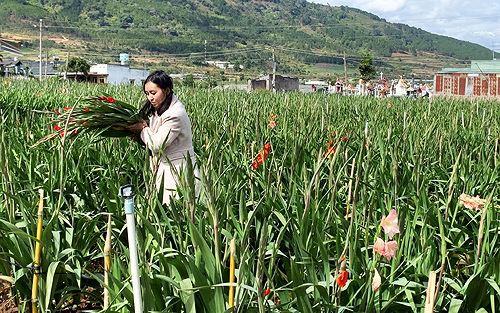 Phập phù giá hoa ở làng hoa lay ơn lớn nhất nước - Ảnh 1.