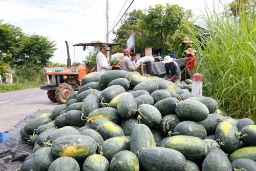 Trung Quốc kiểm soát gắt gao chất lượng dưa hấu Việt Nam khi nhập khẩu  - Ảnh 1.