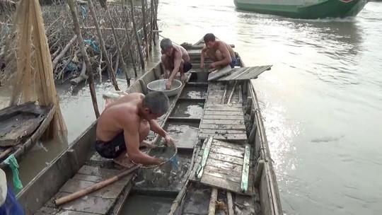 Về miền Tây xem đội quân dỡ chà bắt cá ăn Tết  - Ảnh 13.