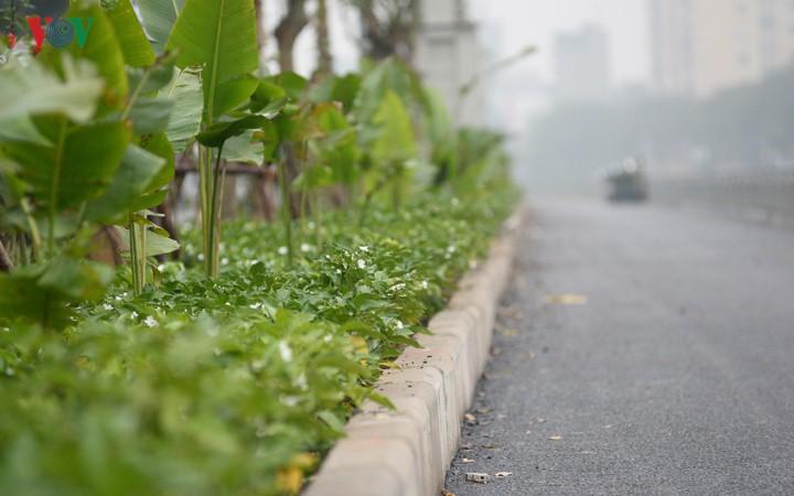 Ngắm con đường đi bộ dài nhất Thủ đô đang dần hoàn thiện - Ảnh 8.