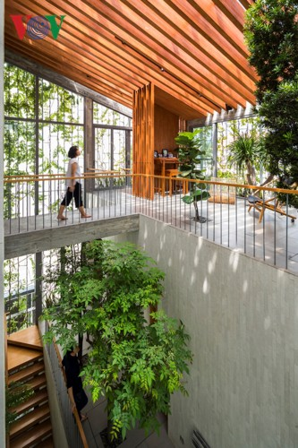 Ngôi nhà tràn ngập màu xanh như trong công viên - Ảnh 6.