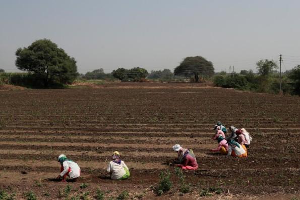 Từ nông trường đến khu ổ chuột, phụ nữ Ấn Độ rơi vào khủng hoảng nghề nghiệp - Ảnh 3.