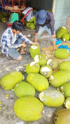 Trái cây bán sang Trung Quốc lại sốt giá - Ảnh 1.