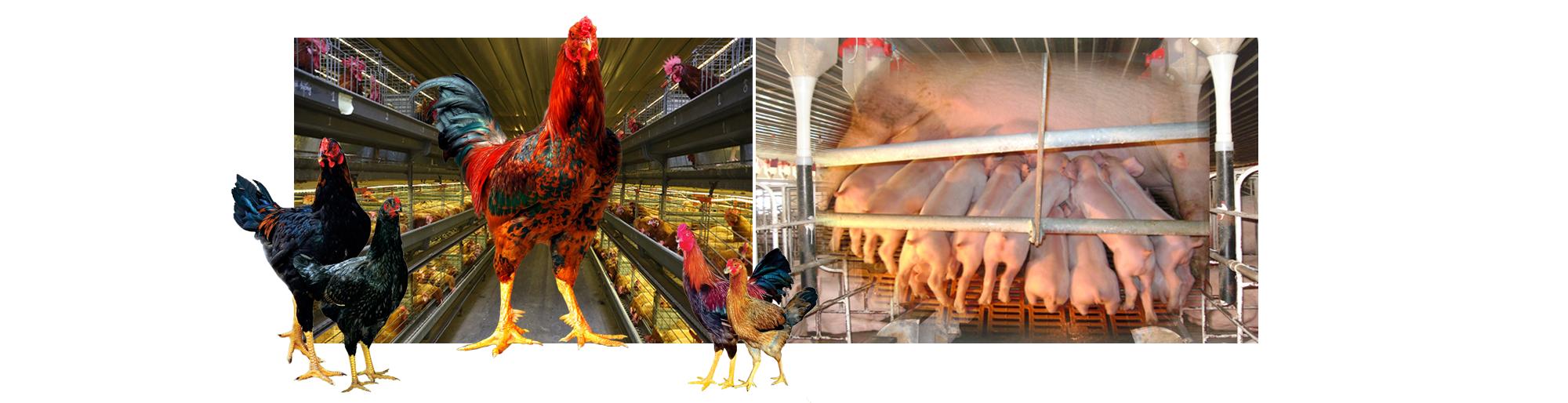 Chủ tịch Dabaco: Chính chuỗi cung ứng khép kín đã giúp Dabaco đạt vị thế hàng đầu trong ngành chăn nuôi cả nước - Ảnh 3.