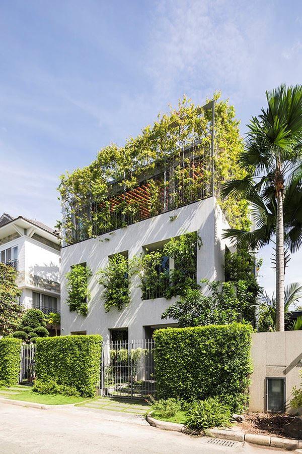 Hô biến cả rừng cây xanh vào trong nhà phố - Ảnh 2.
