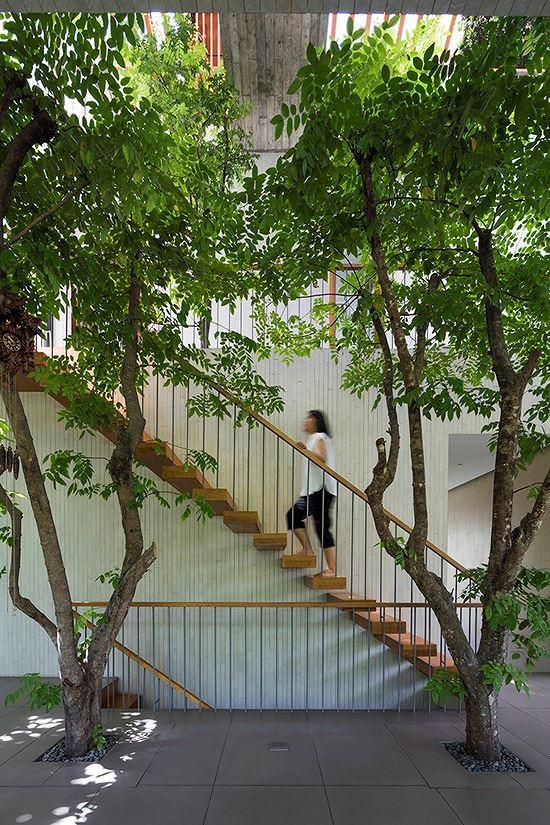 Hô biến cả rừng cây xanh vào trong nhà phố - Ảnh 6.