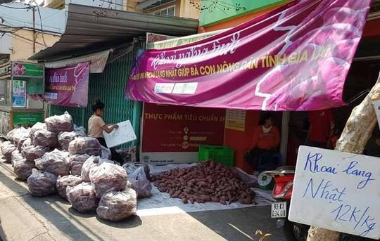 Lập chiến dịch giải cứu khoai lang giúp nông dân Gia Lai - Ảnh 1.