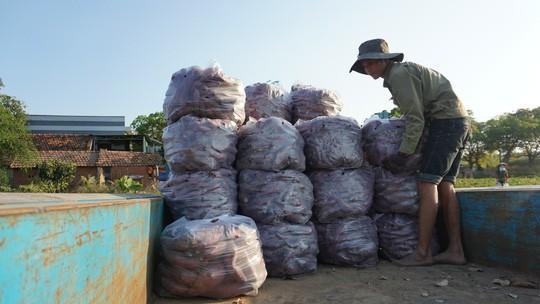 Lập chiến dịch giải cứu khoai lang giúp nông dân Gia Lai - Ảnh 3.