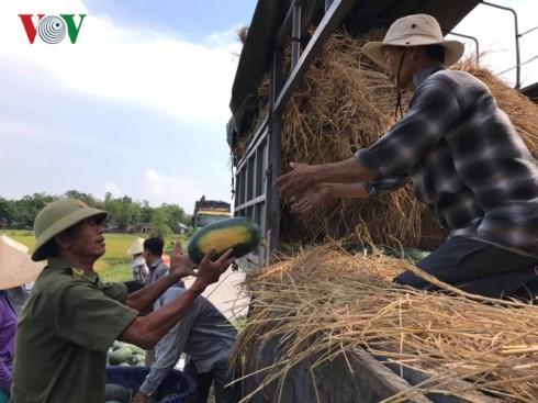 Quảng Nam: Dưa hấu được giá, nông dân phấn khởi - Ảnh 1.