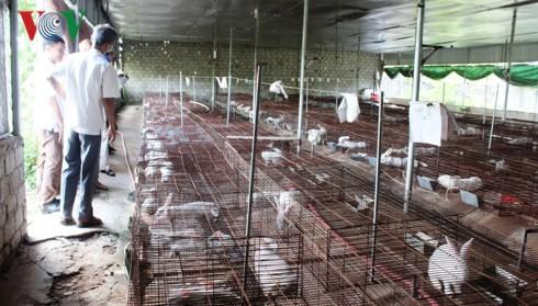 Khăn gói đi học chăn nuôi, trở về quê làm giàu trên vùng đất khô cằn - Ảnh 2.