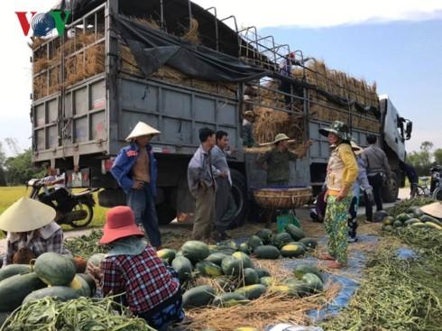Quảng Nam: Dưa hấu được giá, nông dân phấn khởi - Ảnh 3.