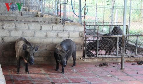 Khăn gói đi học chăn nuôi, trở về quê làm giàu trên vùng đất khô cằn - Ảnh 3.