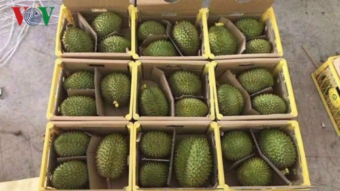 Ùn ứ nông sản không thuộc danh mục xuất khẩu chính ngạch tại Lạng Sơn - Ảnh 2.