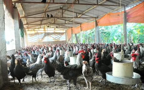 Vừa quay đầu tăng được vài ngày, giá trứng gia cầm lại đảo chiều lao dốc xuống thấp kỷ lục - Ảnh 1.