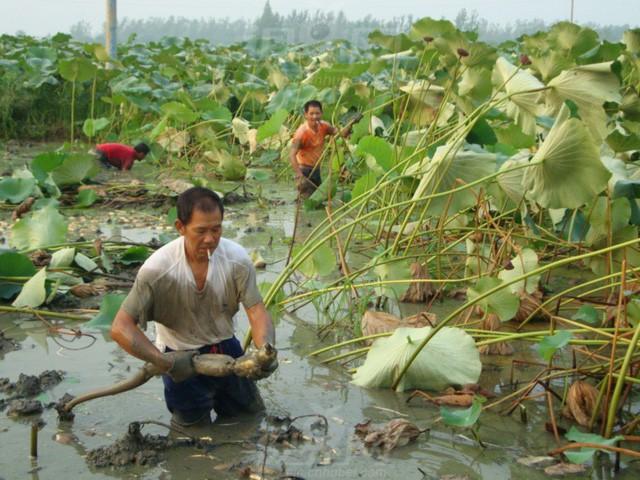 Trung Quốc đang nuôi hơn 1,4 tỷ dân của mình như thế nào? (Phần 1) - Ảnh 13.