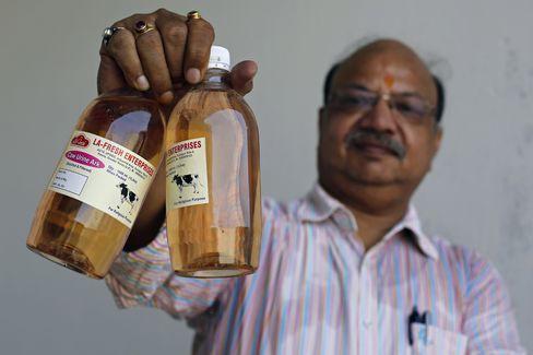 Đại chiến thần bò tại Ấn Độ: Khi nước tiểu bò đắt giá hơn cả sữa - Ảnh 2.