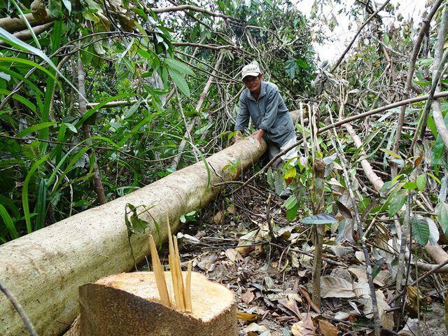 Nhiều dự án 'xẻ thịt' đất rừng trái phép tại Phú Yên - Ảnh 1.