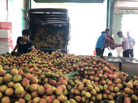 Ngay tại Bắc Giang, vải tươi loại 1 mua tại vườn đã 70.000 đồng/kg! - Ảnh 1.