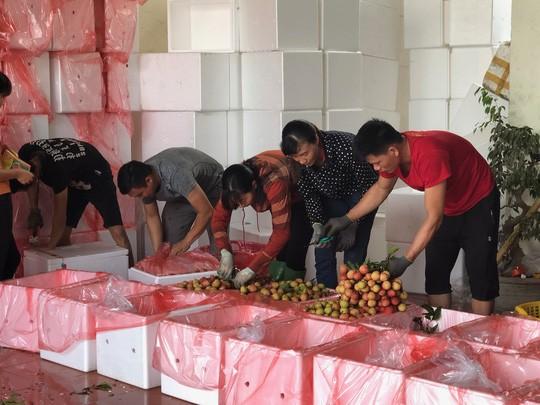 Ngay tại Bắc Giang, vải tươi loại 1 mua tại vườn đã 70.000 đồng/kg! - Ảnh 2.