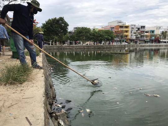 Đà Nẵng: Hơn 5 tấn cá chết trắng tại 2 hồ Thạc Gián và Vĩnh Trung - Ảnh 1.